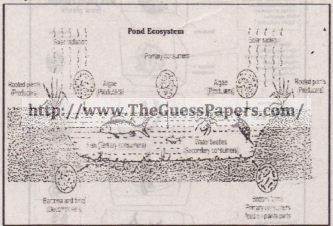 botany solved past paper 2nd year 2015 karachi board, Schematic