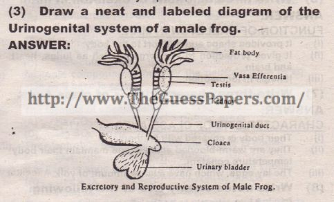 Biology science solved past paper 9th class 2014 karachi board ccuart Choice Image